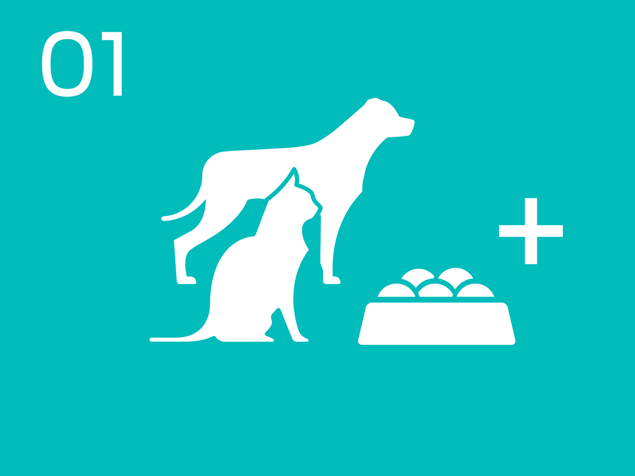 01 Dog and cat food infographic