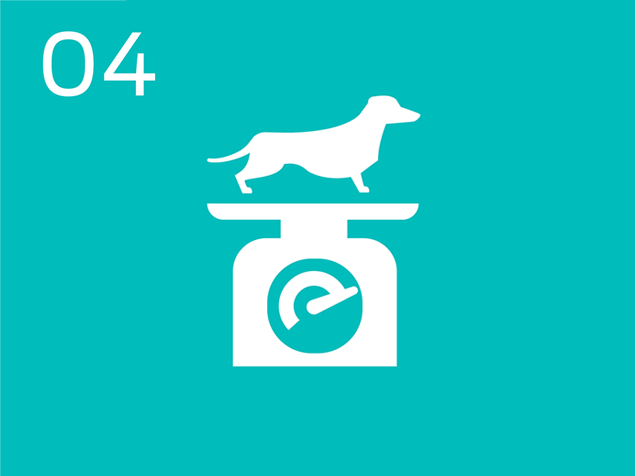 04 dog on scales infographic