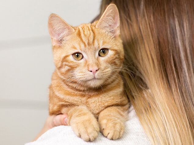 Katze auf Schulter ihrer Besitzerin