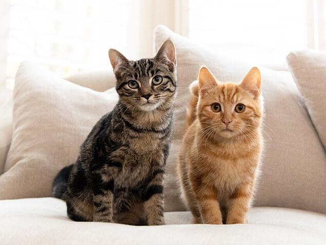 Zwei unterschiedliche Katzen