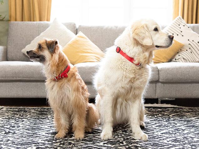 Zwei unterschiedliche Hundearten