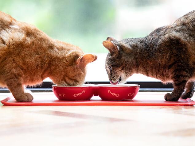 Zwei Katzen fressen aus ihren Näpfen