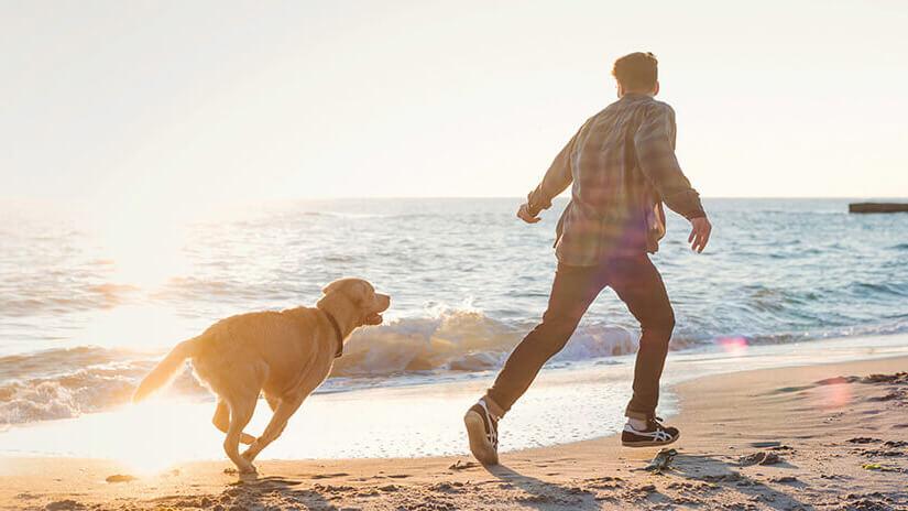 Hund und Besitzer am Strand