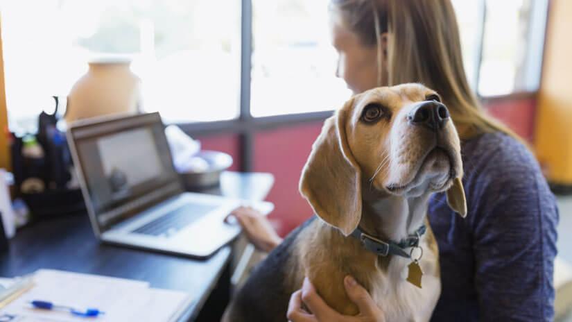 Hund mit Frauchen im Büro