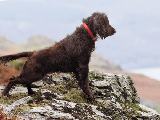 Dog looking out over rocky landscape