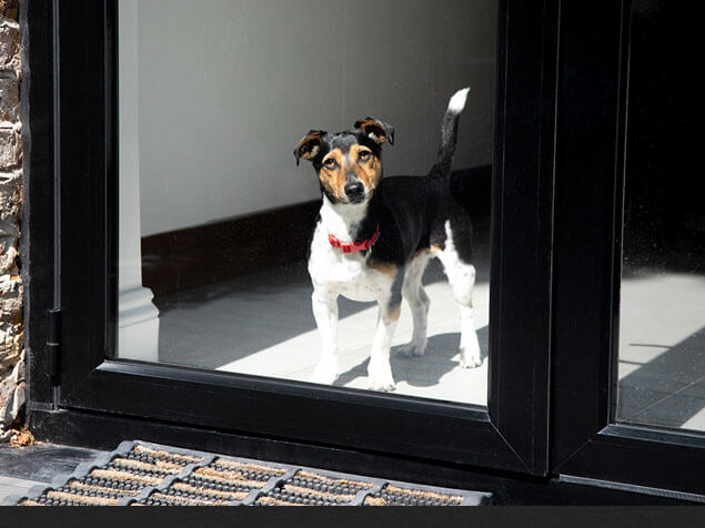 Dog with red collar looking out the window