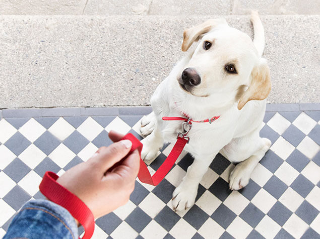 Dog with red collar sitting next to the owner