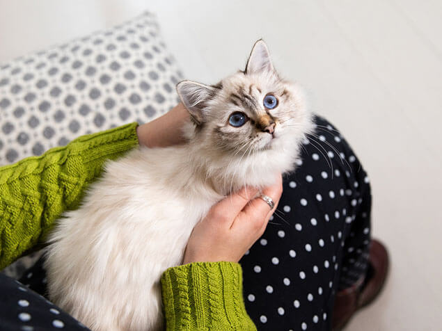Cat laying in woman's arms