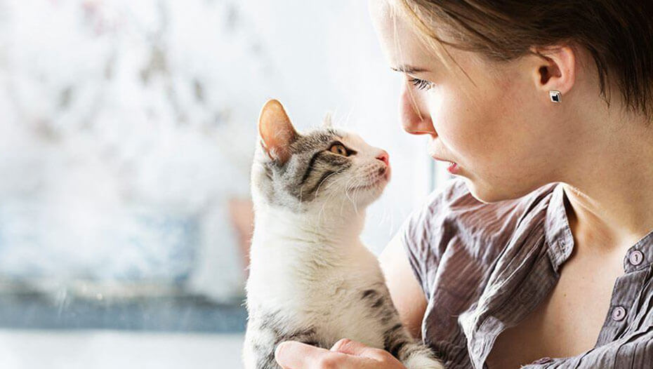 Cat looking at the owner