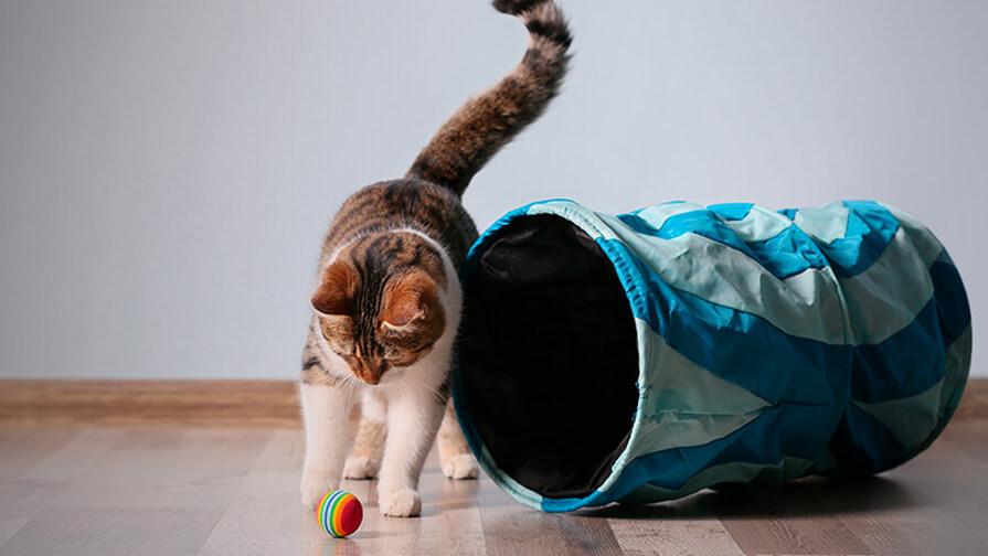 Katze spielt mit ihren Spielsachen