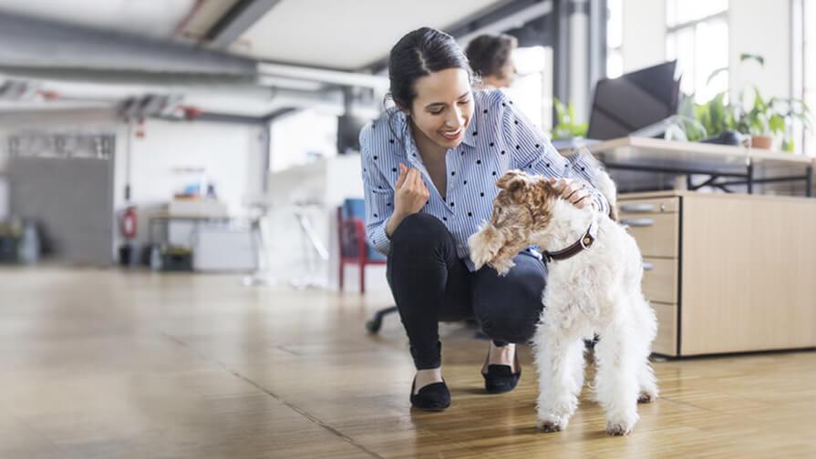 Hund im Büro mit Besitzer