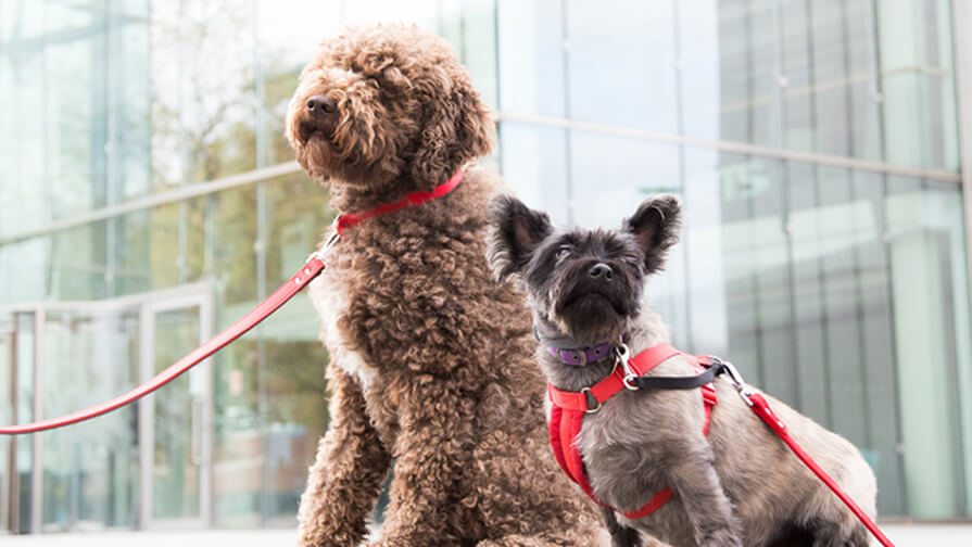 Two dogs sitting outside an office building