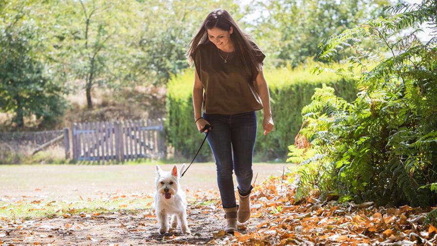 Hund geht mit Frauchen gassi