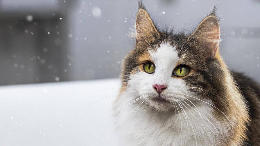 Umgang mit Katzenallergenen