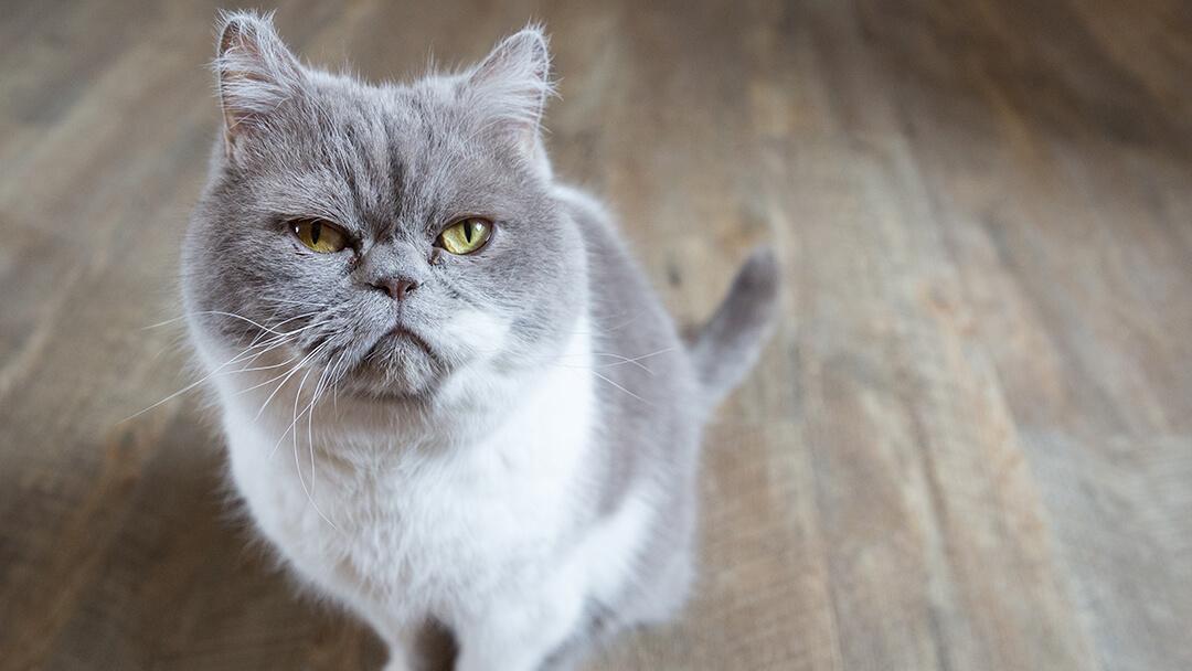 Alte Katze - Tipps zu Futter, Pflege & mehr | PURINA