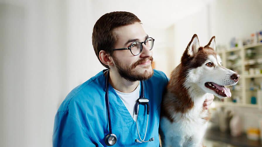 Tierarzt mit einem Husky