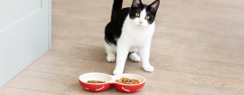 Katze frisst nicht: Warum und was tun? | PURINA