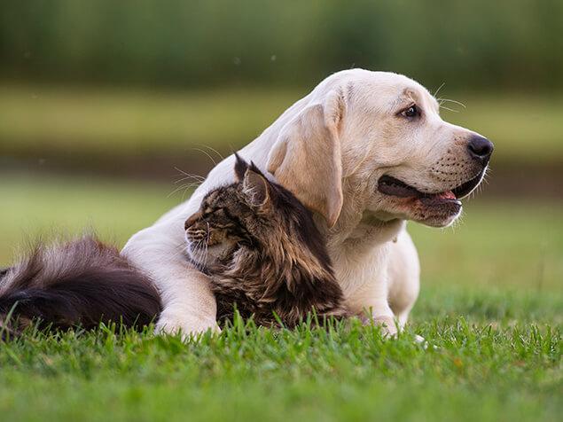 Hund und Katze liegen auf der Wiese