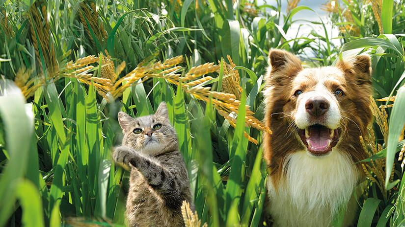 Hund und Katze im Getreidefeld