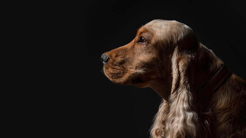Proplan Hund vor schwarzem Hintergrund