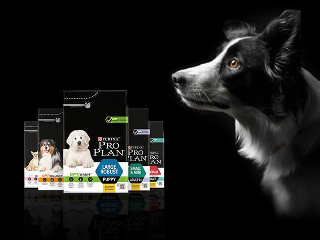 Hund mit ProPlan Packungen