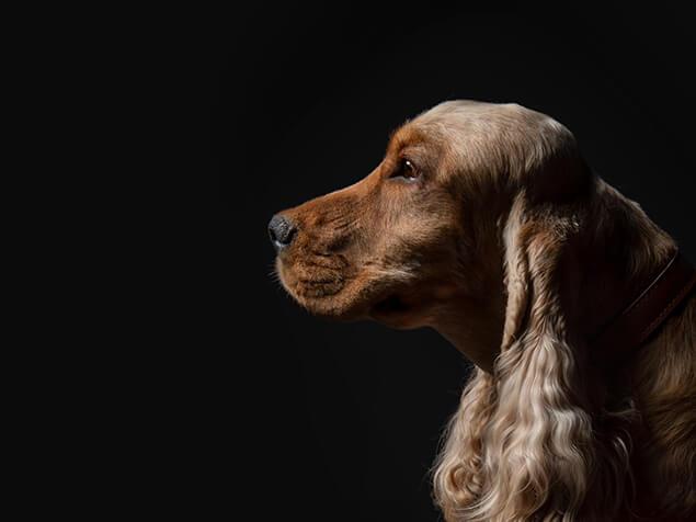 Hund auf schwarzem Hintergrund