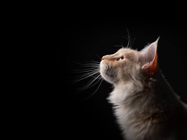 Katze auf schwarzem Hintergrund