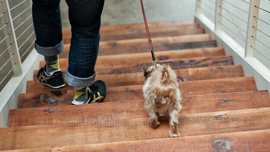 Hund und Herrchen auf Treppe