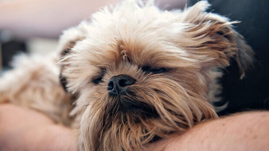 Hund im Arm vom Menschen
