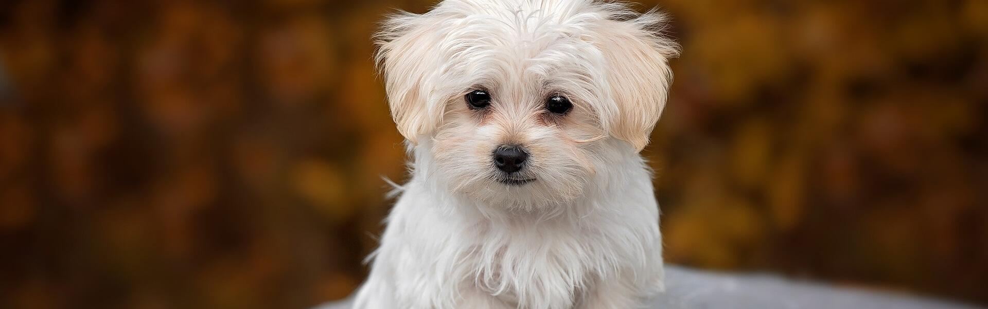 Geeignet hunde für allergiker Hunde für
